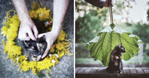 Фоторепортаж об летнем отдыхе с кошкой (24 фото)