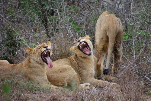 Смешные и забавные животные (36 фото)