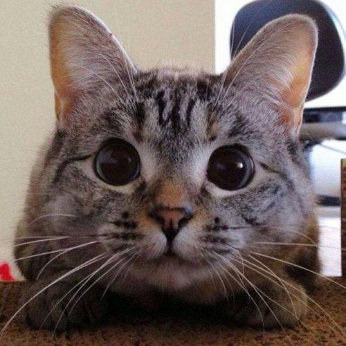 Очаровательная Нала - самая известная кошка в Instagram (5 фото)