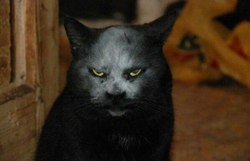 Фотография кота-демона,которая облетела весь Интернет (4 фото)