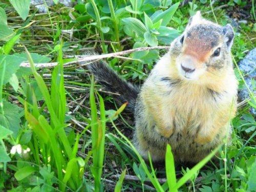 Очаровательные и забавные животные (35 фото)