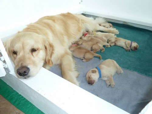 Мамочки,которые гордятся своим чудесным потомством (27 фото)