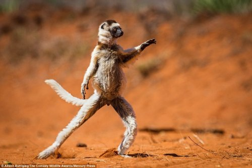 Самые весёлые и забавные фотографии дикой природы (12 фото)