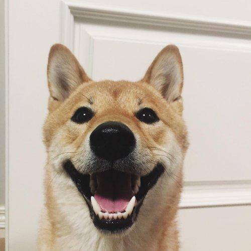 Барни-самый весёлый пёс (21 фото)