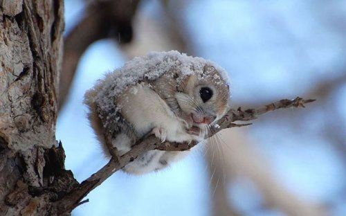 Милые летяги (12 фото)