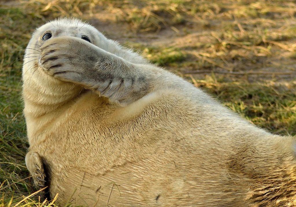 Лучшие фотографии животных со скотобоен