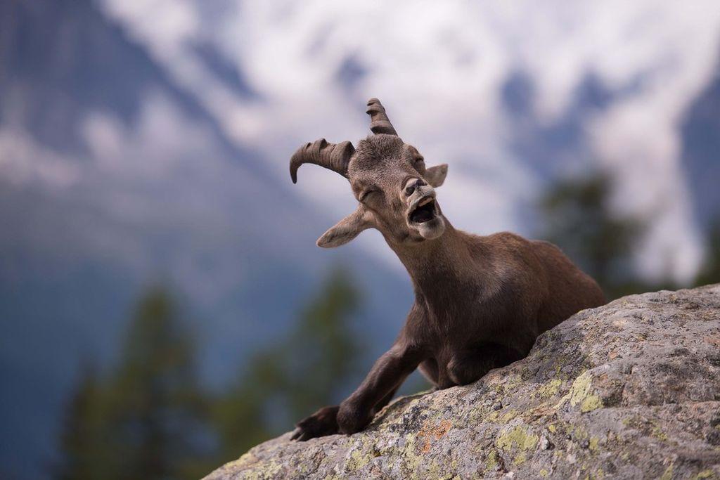 нужна смешные фото диких животных был первым ведущим
