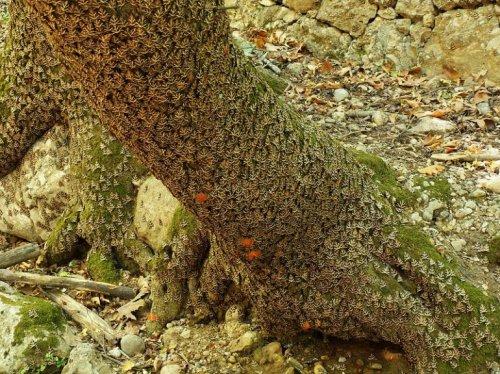 Долина бабочек в Греции (7 фото)