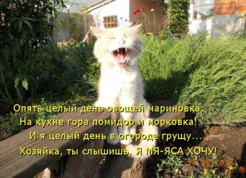 Котоматрица на радость! (35 фото)
