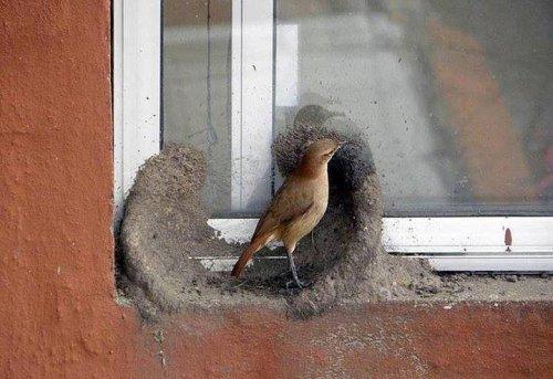 Построил дом, привёл жену (6 фото)