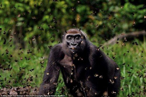 Удивительные снимки от фотографов дикой природы (9 фото)