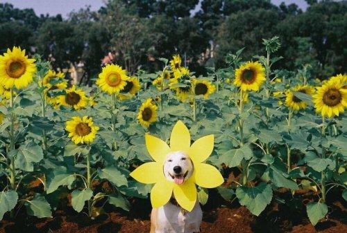 Забавы от животных (35 фото)