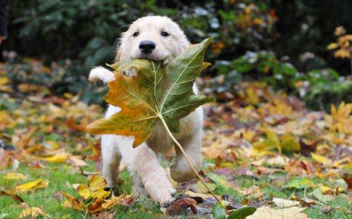 Осеннее настроение (15 фото)