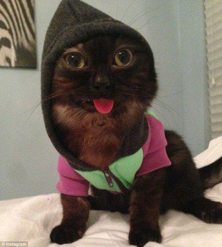 """Кот с постоянно высунутым языком стал звездой """"Инстаграма"""" (8 фото)"""