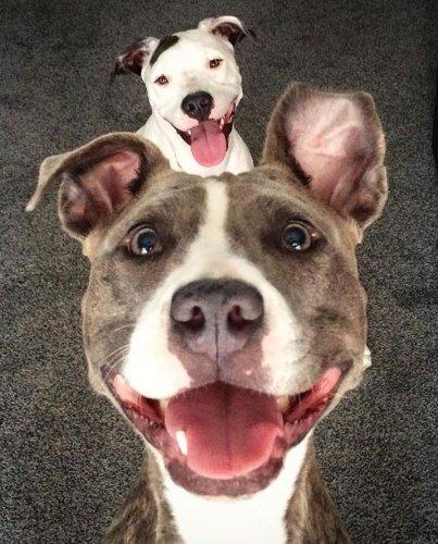 Смешные и забавные собаки (30 фото)