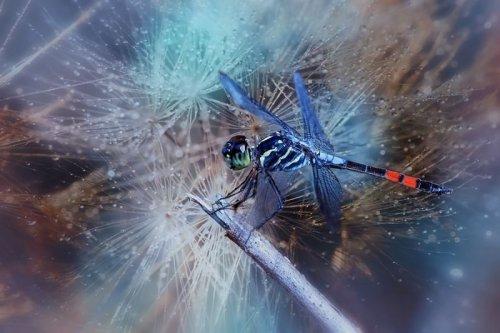 Сказочные фотографии насекомых от фотографа Syuwandi Sien (20 фото)