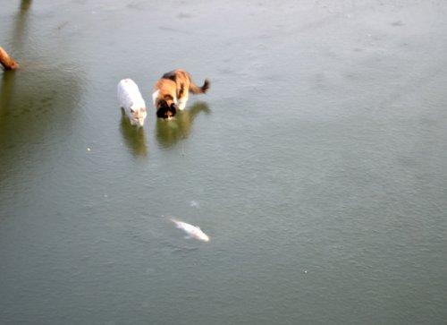 Юмор : Как два кота на рыбалку сходили