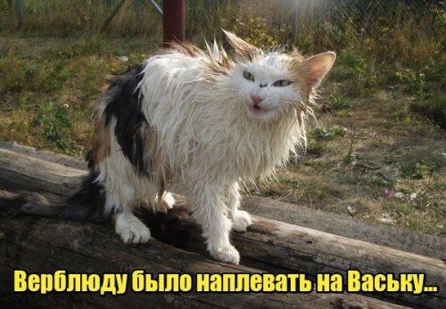 ЛОЛ котэ (30 фото)