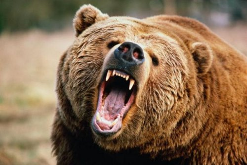 Случай в тайге: Охотник неожиданно столкнулся с медведем