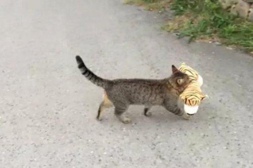 Самый популярный котик недели