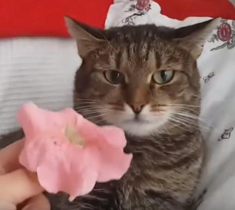 Юмор: Кот и цветок