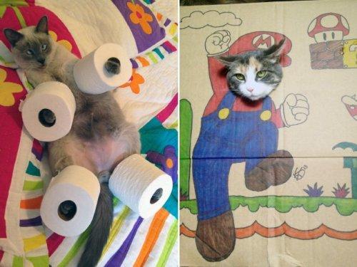 Недовольные кошки по вине глупых хозяев (16 фото)