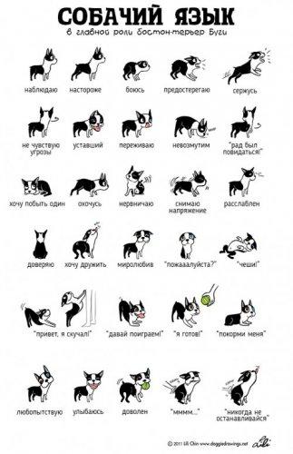 Иллюстрации Лили Чин, которые помогут понять кошек и собак (2 фото)