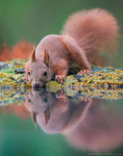 9 лучших кадров октября от National Geographic