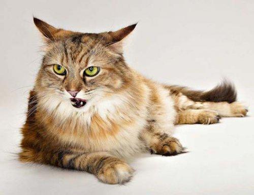 Всплеск эмоций: фотографии животных от Эвана Кафки (19 фото)