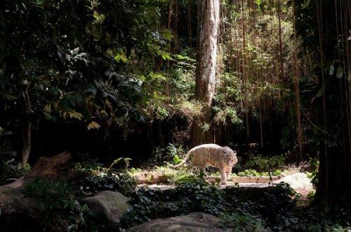 Хранители леса (10 фото)