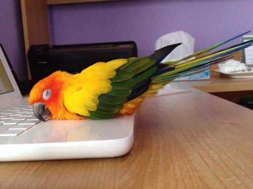 Юмор: Домашние животные в поисках тепла (10 фото)