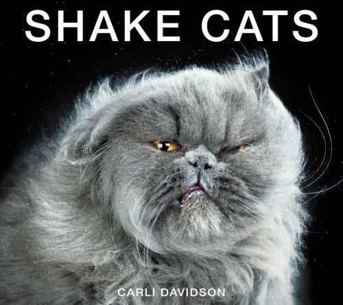 """Проект """"Shake Cats"""" от фотографа Карли Дэвидсона (11 фото)"""