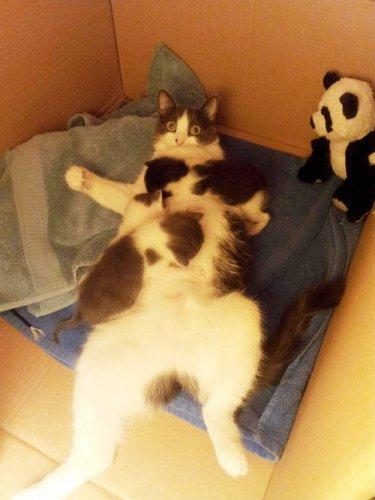 Мамочки очаровательных котят. Часть 1. (25 фото)