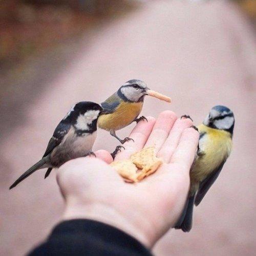 9 снимков фотографа, с которым дружат животные  (9 фото)