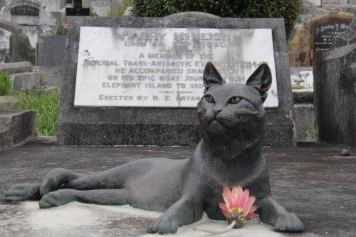 Могила Миссис Чиппи-первой антарктической кошки (3 фото)