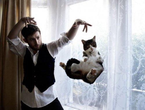 Фотографии котов, сделанные в самый нужный момент (19 фото)