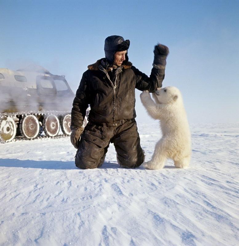 Картинки, картинки приколы арктика