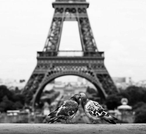 Любовь в мире животных (15 фото)
