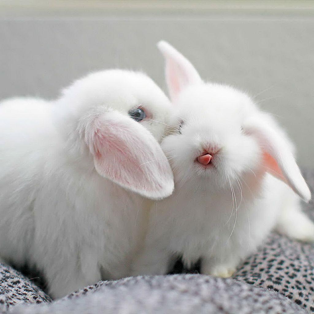 Картинки целующихся зайчиков, извинениями девушке