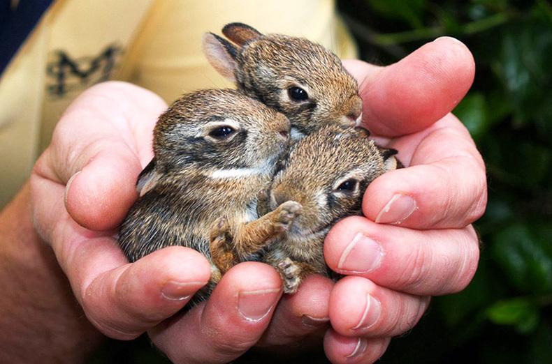 Картинки на тему маленькие животные