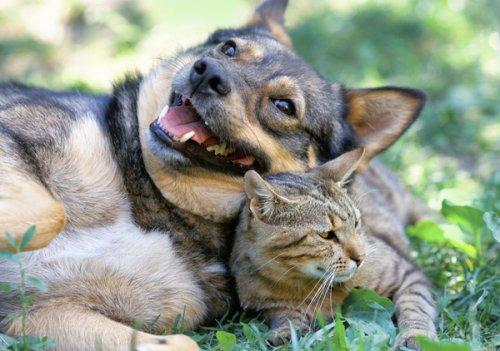 Собаки и кошки-наши верные друзья (40 фото)
