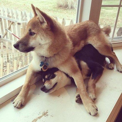 Прикольные фотографии собак за 2015 год (24 фото+гифки)