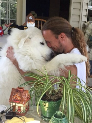 Милые и очаровательные собаки для Вашего настроения! (25 фото)
