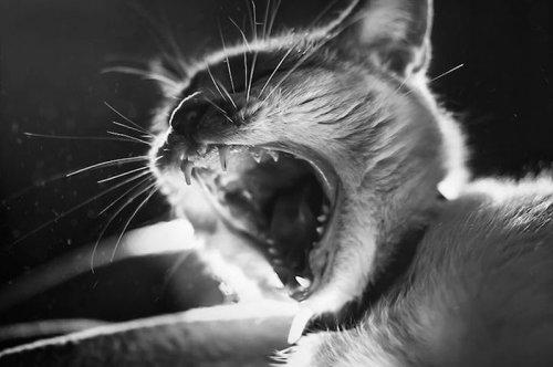 Фотографии кошек от Фелисити Берклиф (10 фото)
