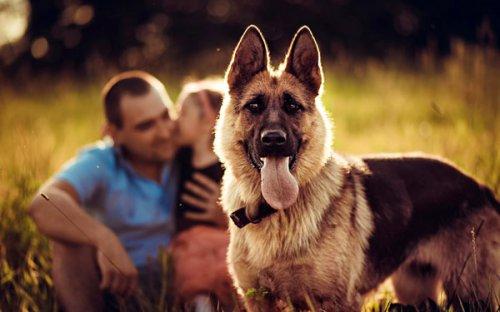 Рейтинг собак для привлечения женщин