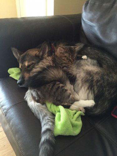 Смешные и забавные кошки (22 фото)