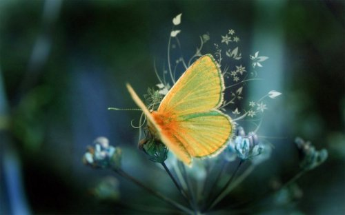 Красивые фотографии с бабочками (30 фото)