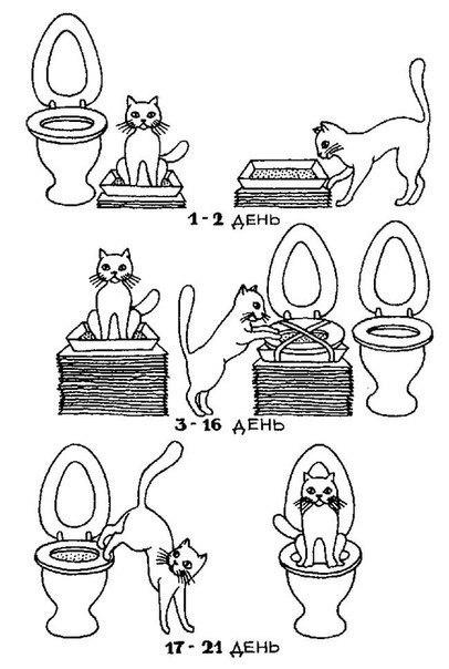 Как приучить кошку к унитазу и избавиться от горшка