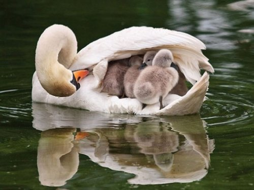Семейные фотографии из мира животных (14 фото)