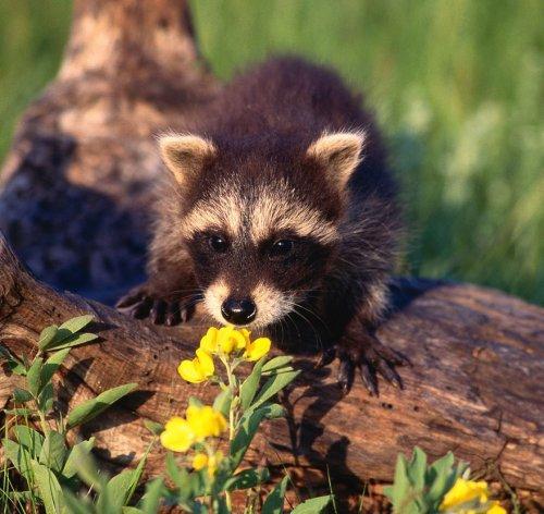 Милые животные,нюхающие цветы,покорят ваше сердце (34 фото)